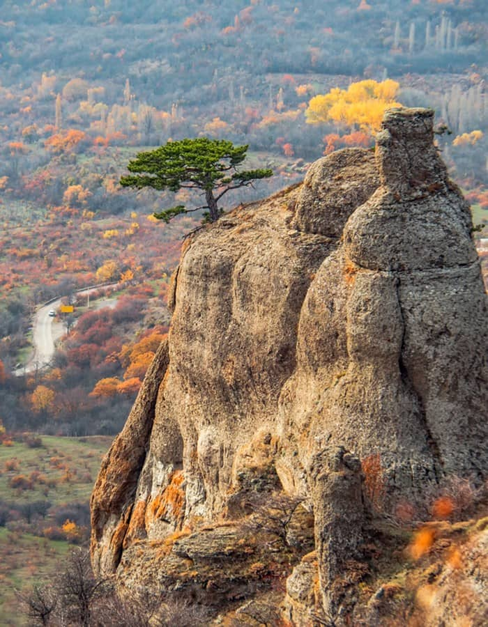 A rock with a tree on the top of it with a view over a road and autumn forest.