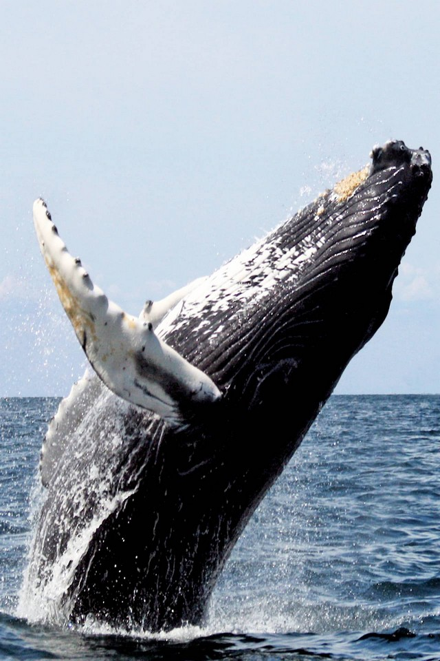 A whale in the sea