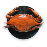 A giant red Kamchatka crab