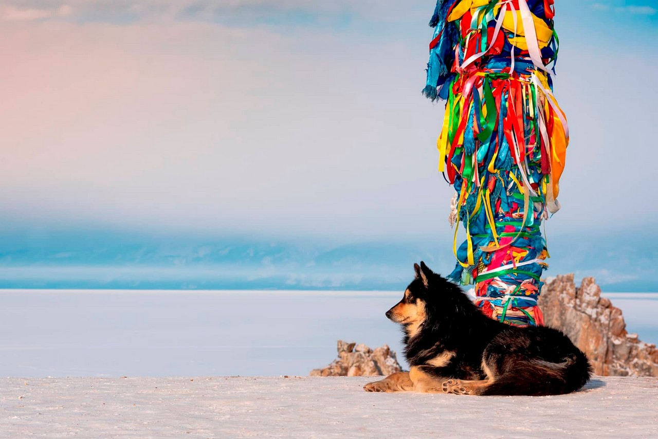 A shore of lake Baikal in winter, a dog in front of a sacred pile decorated with colorful ribbons