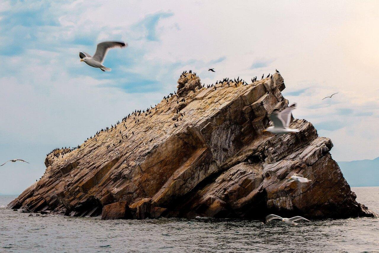 Sea-gulls on a rock in the lake