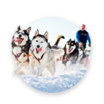 A sledge with huskies in winter