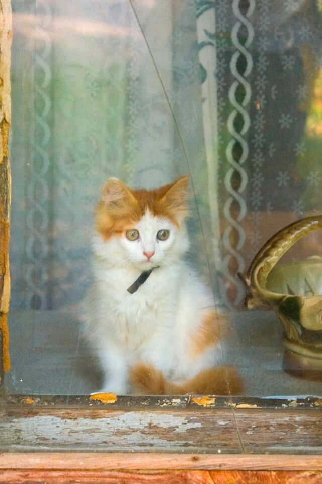 A cat sitting inside of a wooden house