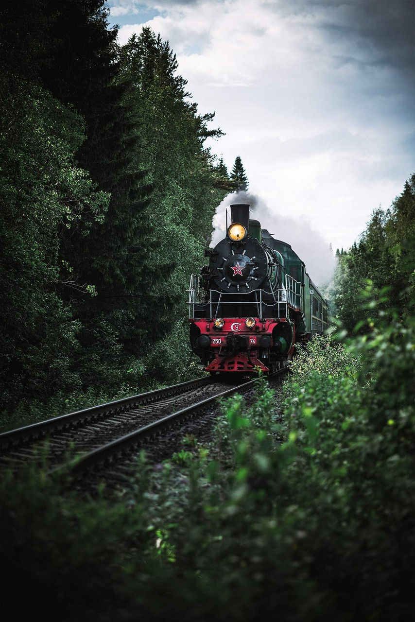 A vintage steam train of the 20th century on the railway in the pine forest