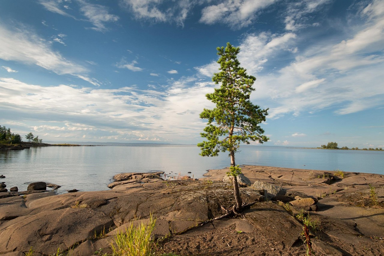 A pine tree on the rocky shore of lake Ladoga, beautiful clouds in the blue sky