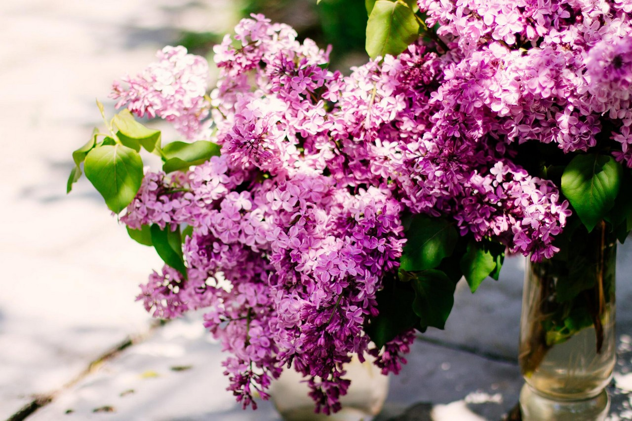 Bunch of lilac in a vase