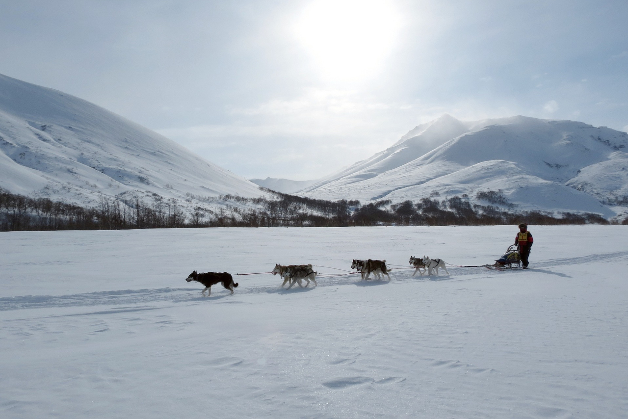 Dog sledge in winter, mountains in the background