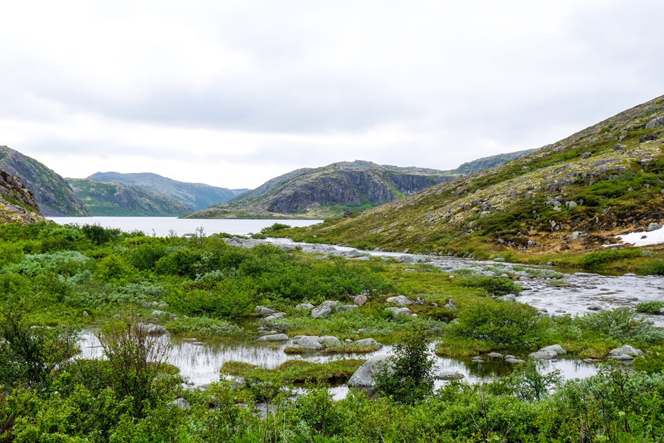 A view of a tundra and small hills and stones, northern nature, green moor with standing water
